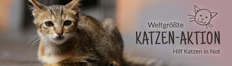 Spendenaktion Katzen Tierschutz Shop