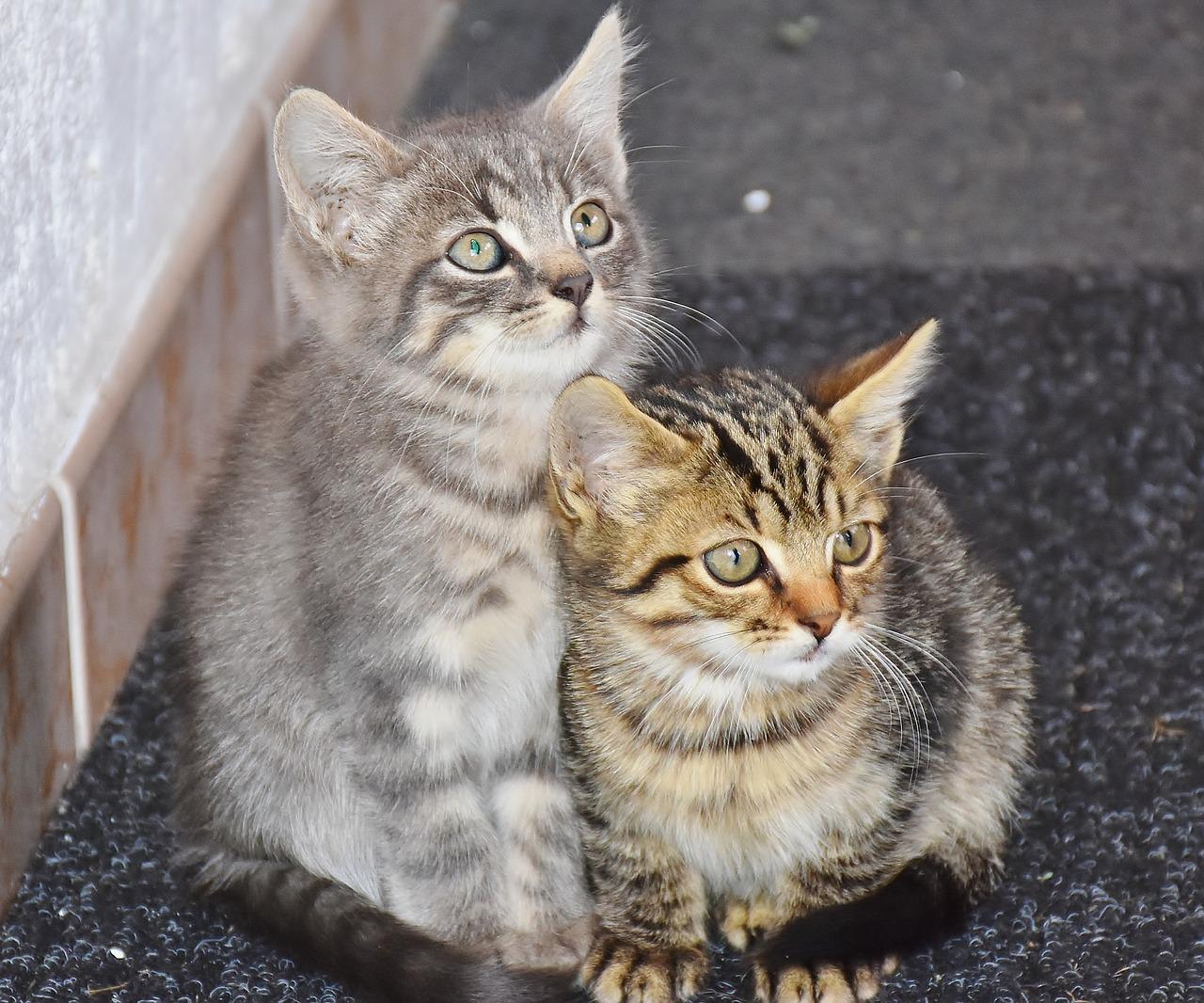 Katzenbaby stubenrein bekommen