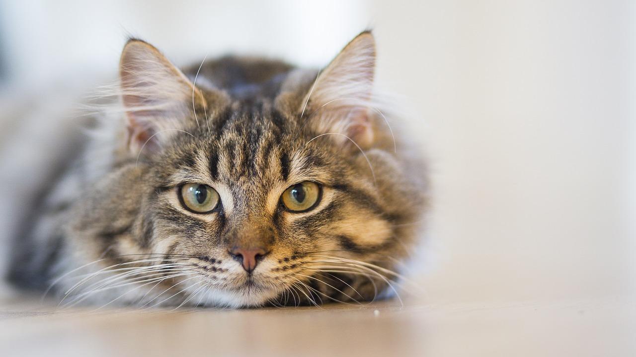 Katzenlogik