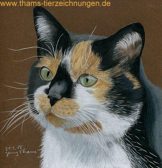 tierportrait-katze-dreifarbig-2