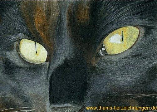 tierportrait-katzengesicht-1