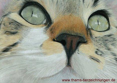 tierportrait-katzengesicht-2