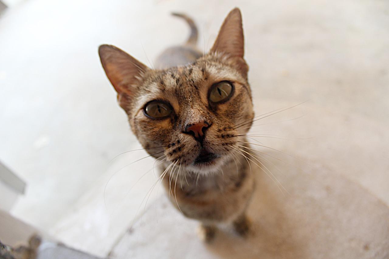 Katze angebot