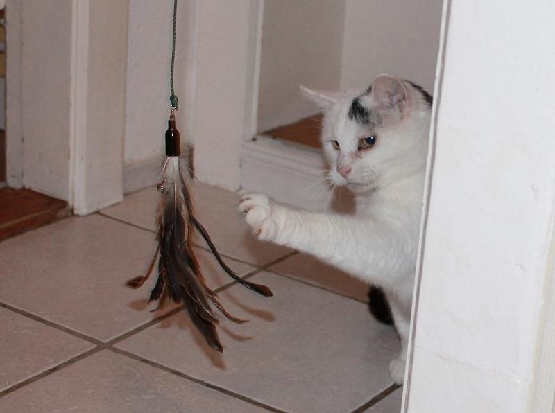 Katze spielt