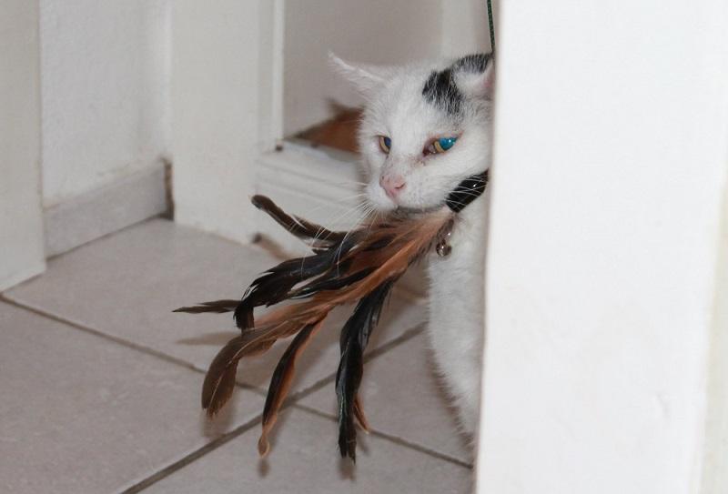 Katzenfeder
