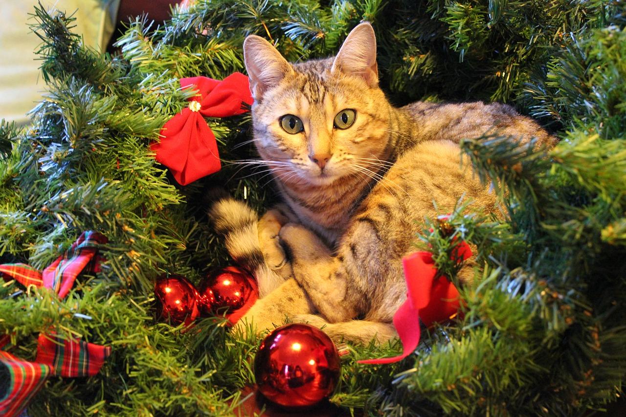 Weihnachtsangebote Katze