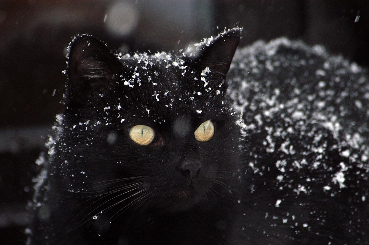 DIY Schlafkiste für Streunerkatzen