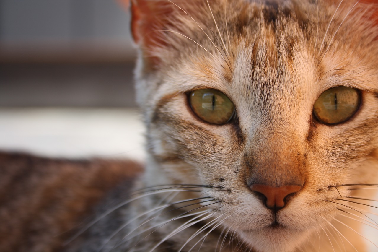 Katze Cat Walk Wanddurchbruch