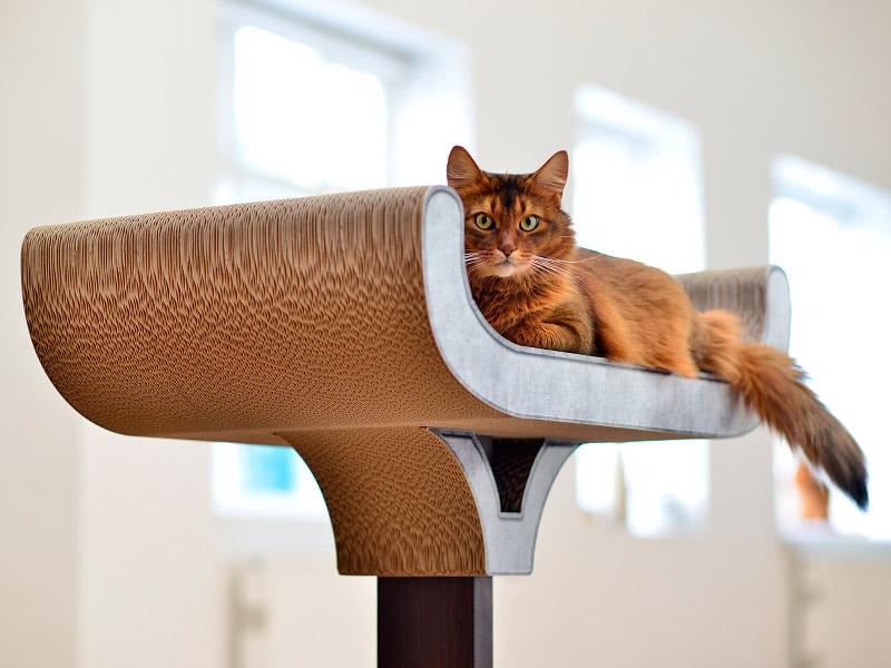 cat-on-kratzbaum-schale-corbeille