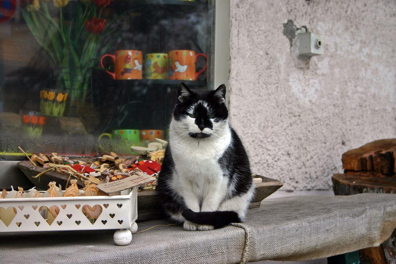 Katze Beton