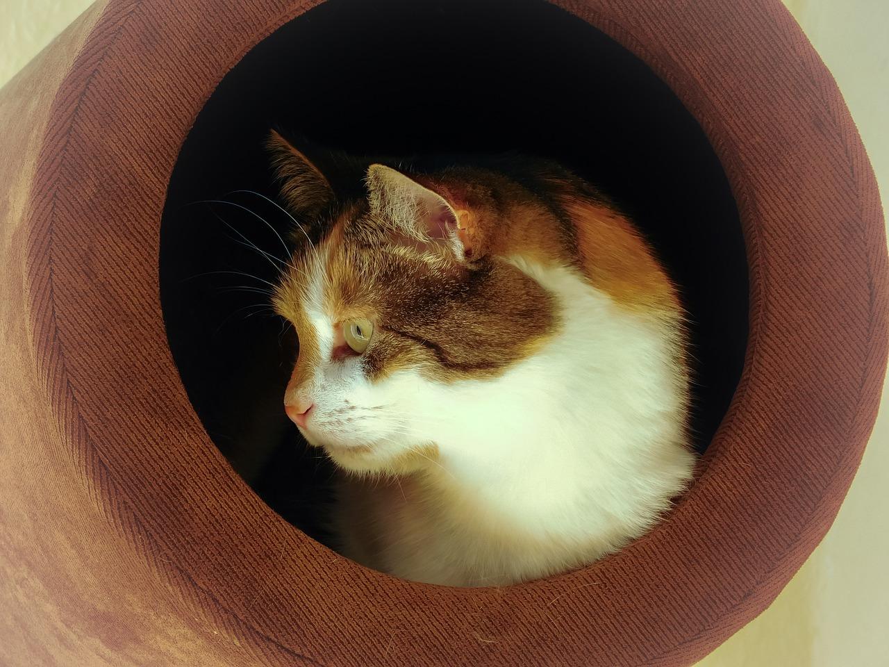Katze Hoehle Stress