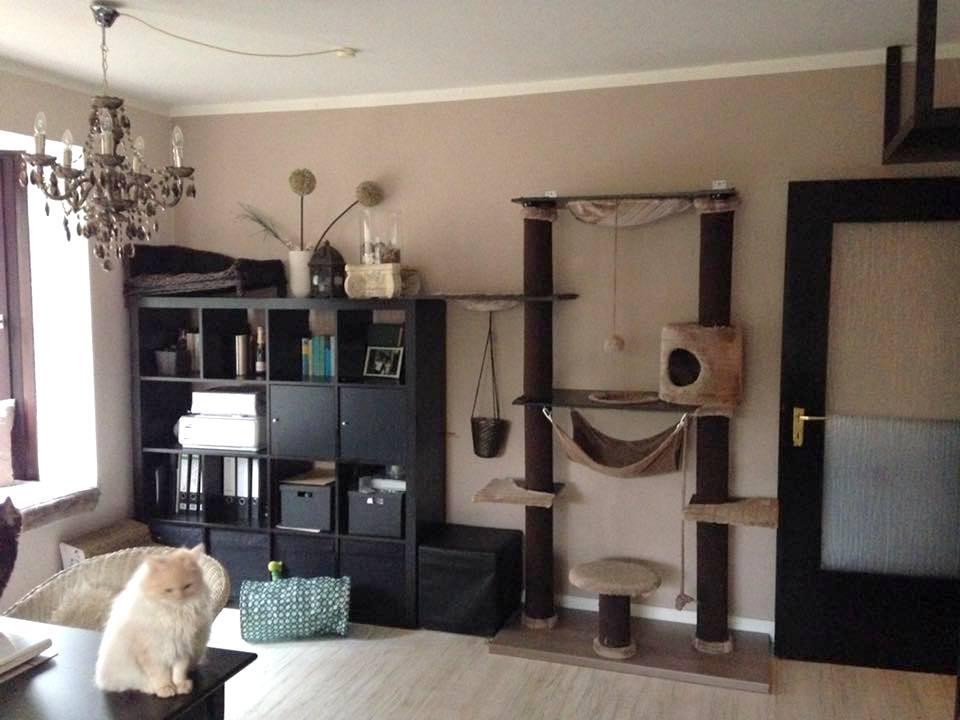 Top Wohnzimmer katzengerecht einrichten – Beispielbilder – Katzenblog RI63