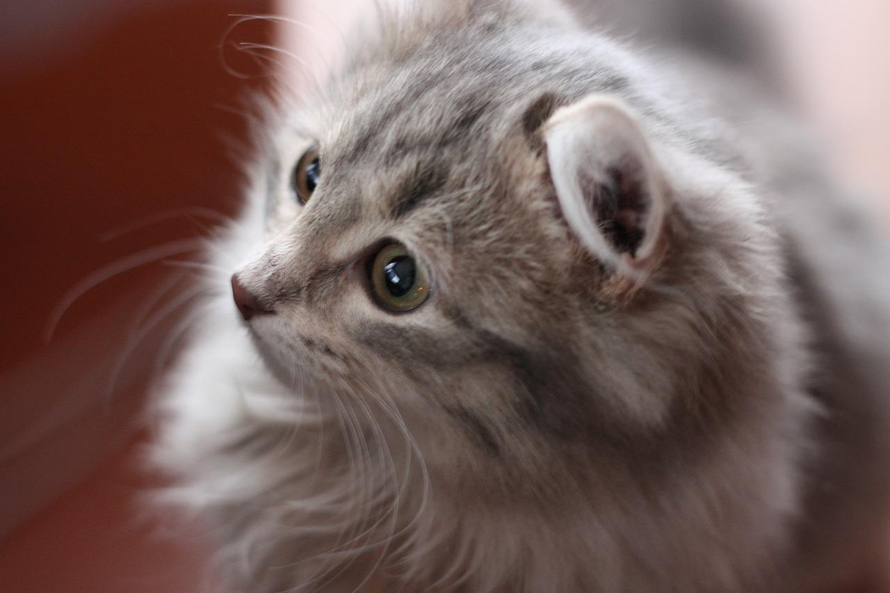 Katzenfummelbrett