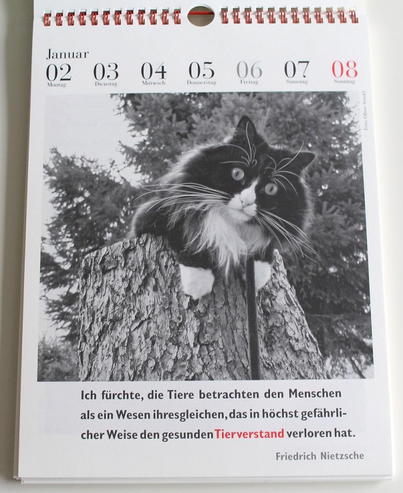 Katzenkalender1