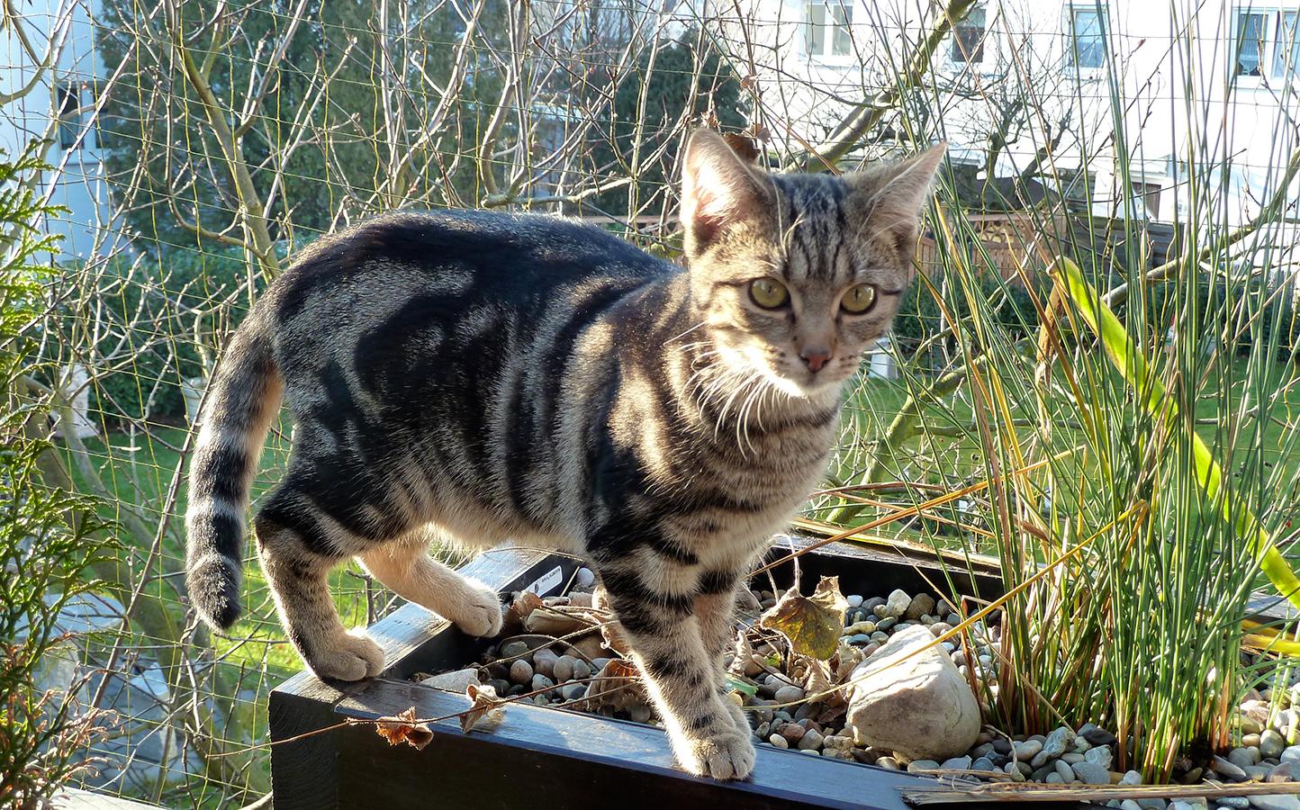 Katzensicherer Auslauf