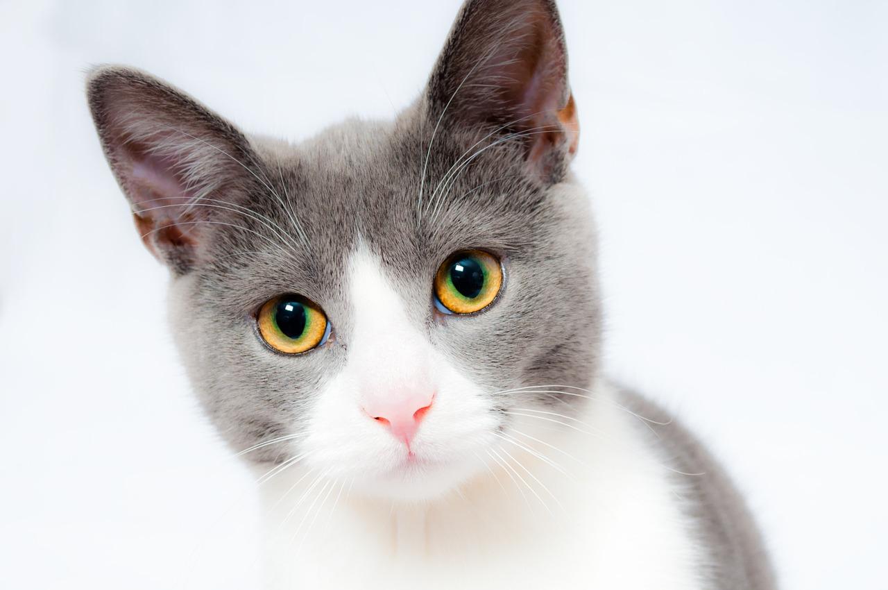 Katzentoilette kaufen