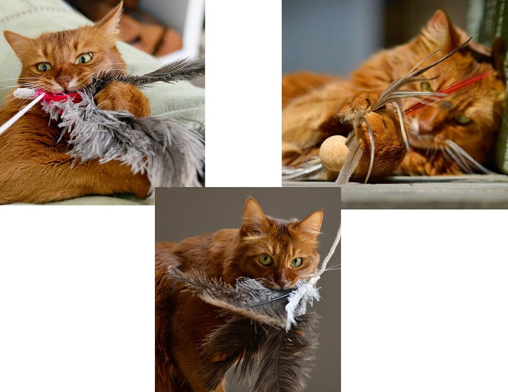 Feder-Katzenspielzeug
