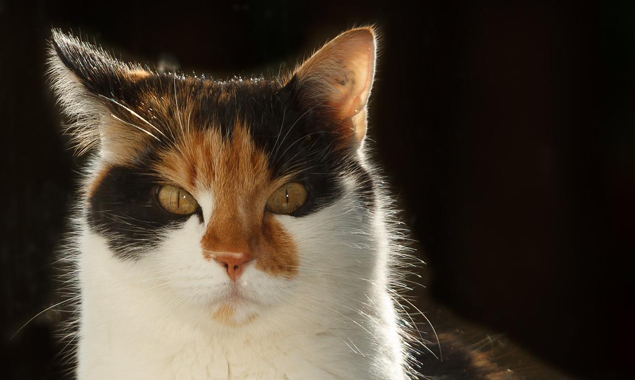 Katze pinkelt neben die Toilette