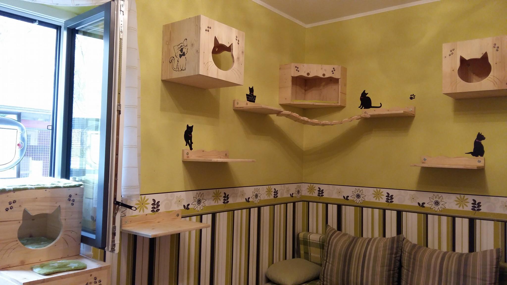 Katzen-Kletterwand