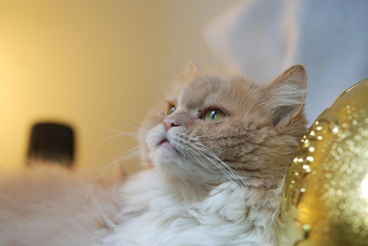 Gut bekannt Katzenbrunnen mit Bewegungsmelder aufrüsten – Katzenblog.de AN47
