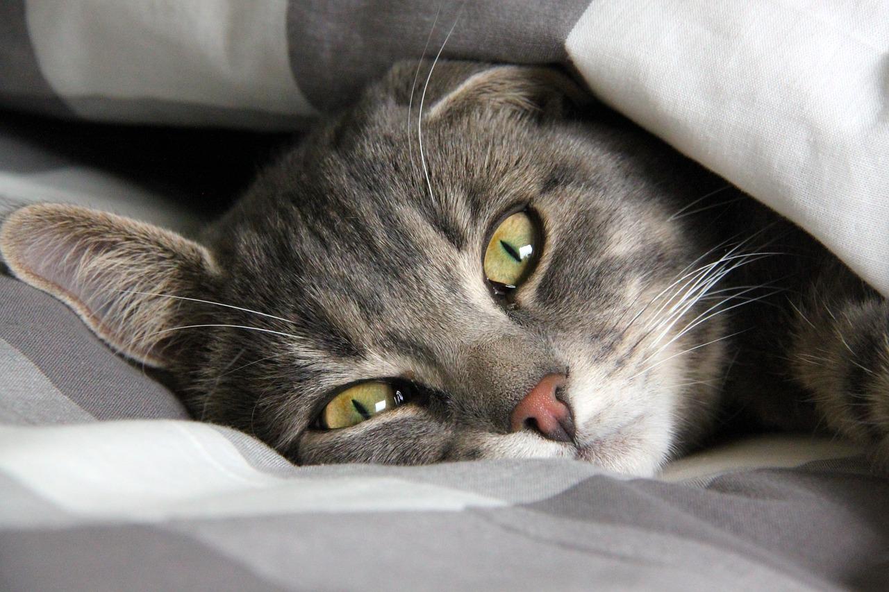 Katzenfutter Katzenzubehoer Angebot