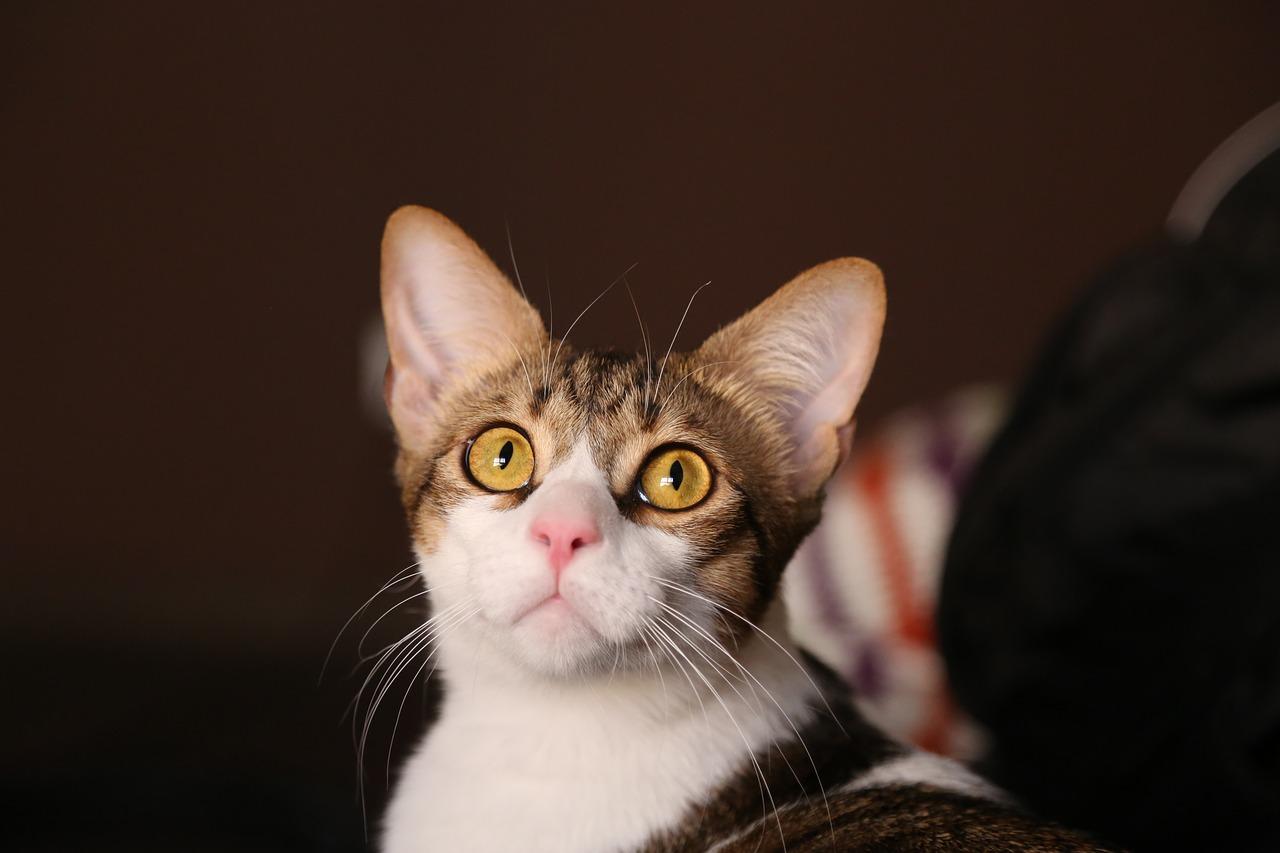 Katzenhoehle selber naehen