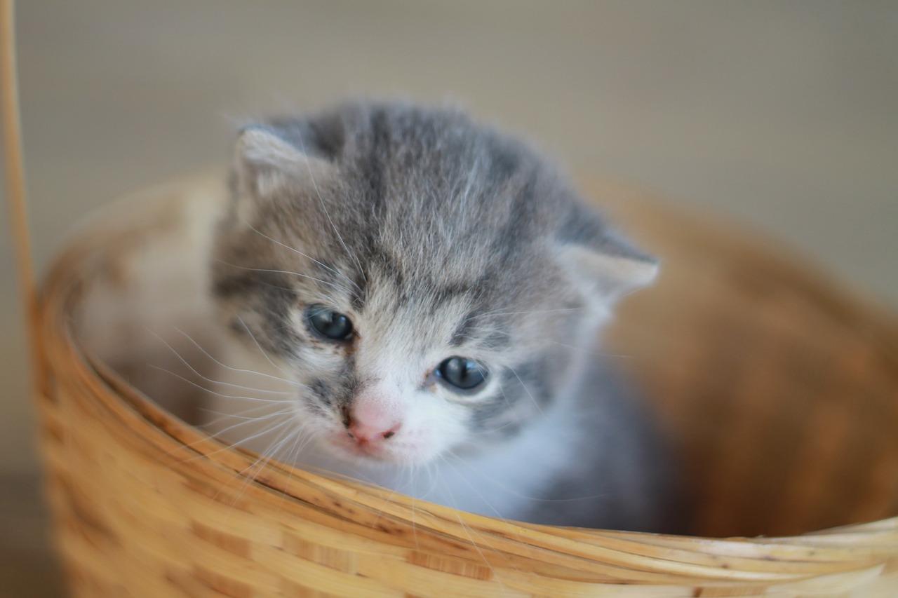 Katzenschutz Kastrationspflicht