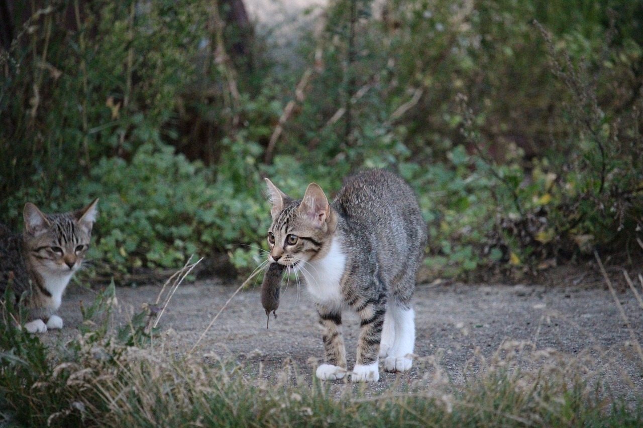 Stiftung Warentest Katzenfutter