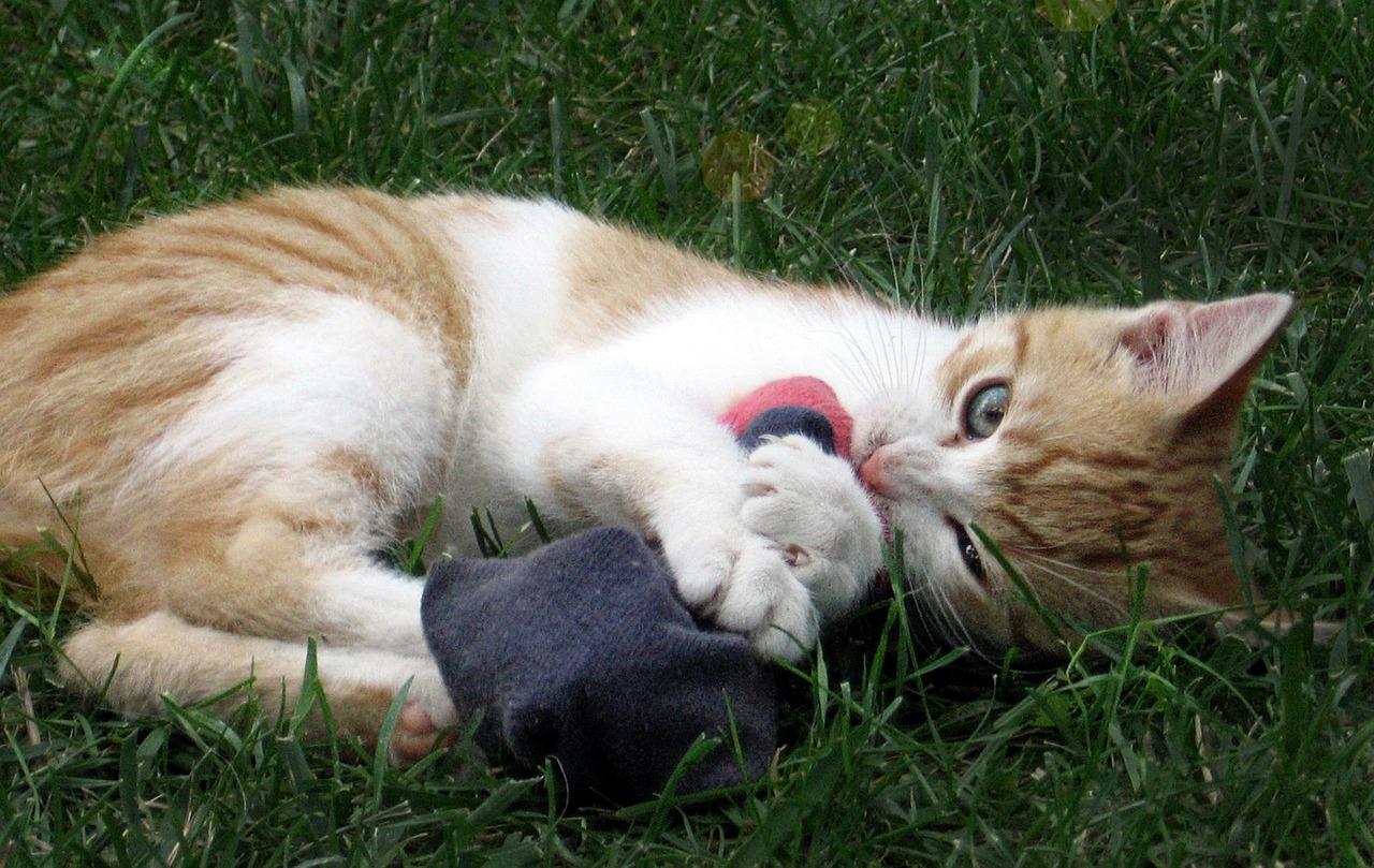 Katze Strumpf