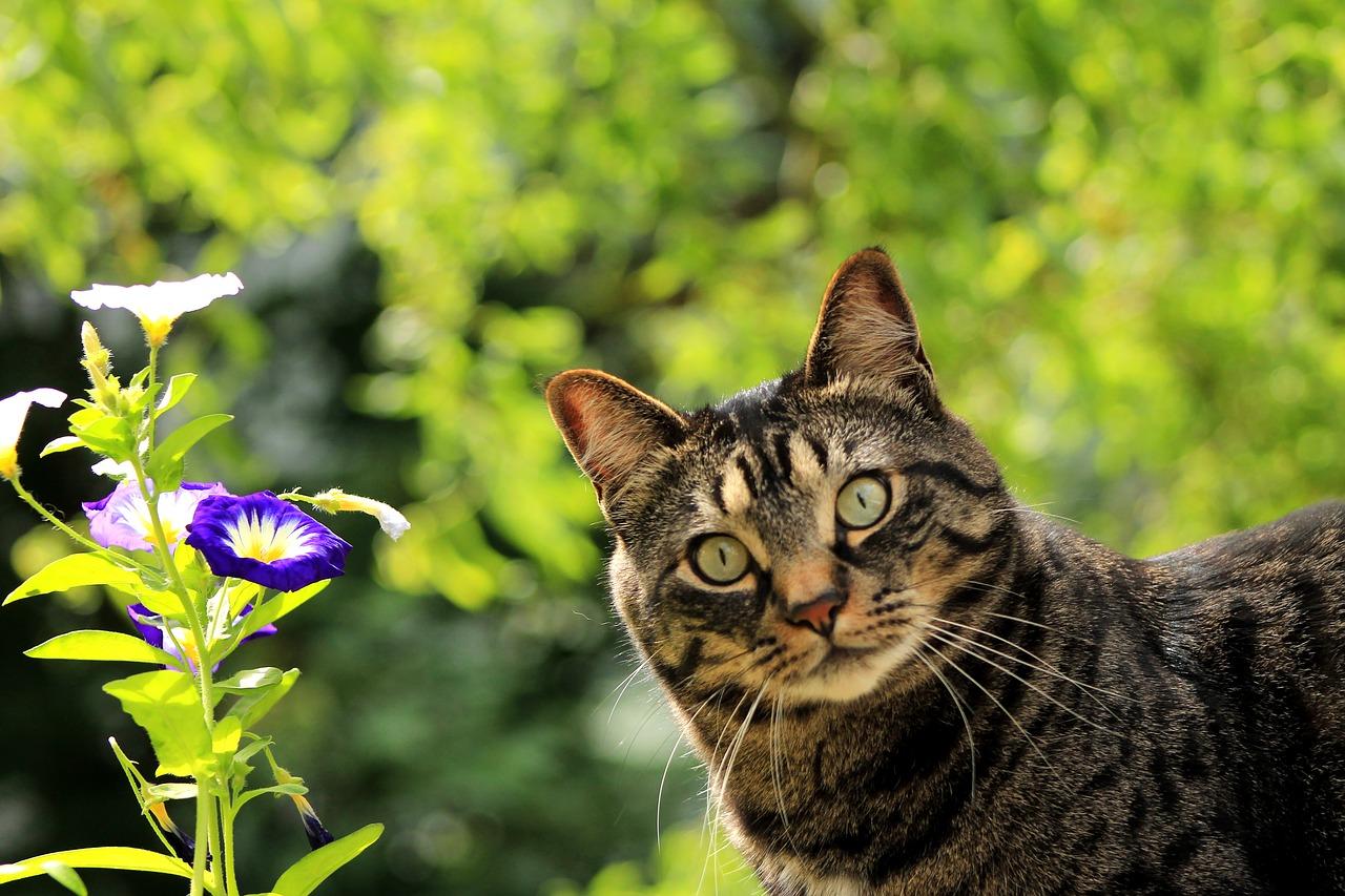 Ueberrschung Katze