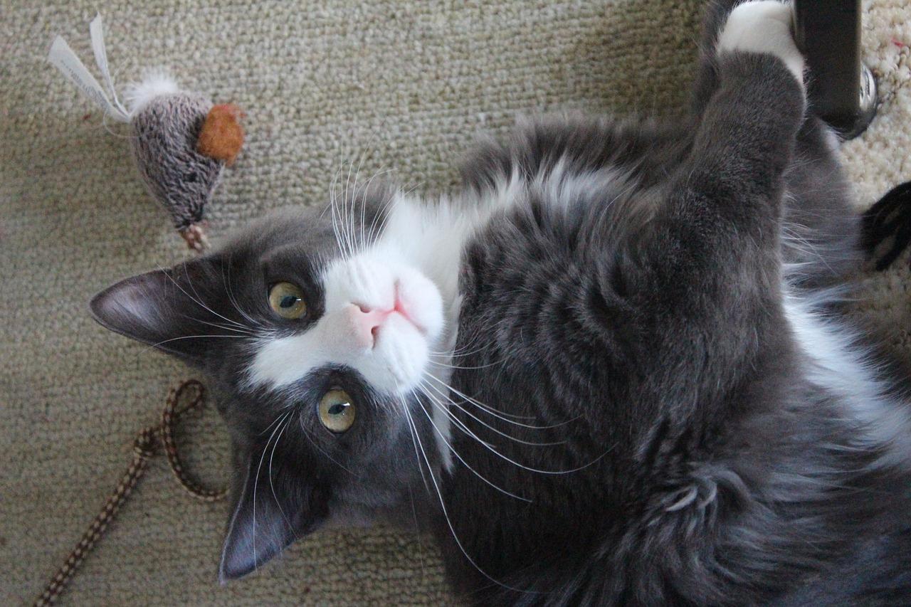 DIY Katzenspielzeug Fummelbrett