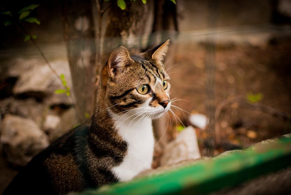 Clickerkurs Katzen