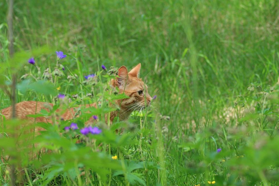 Freigaengerkatzen Gefahren