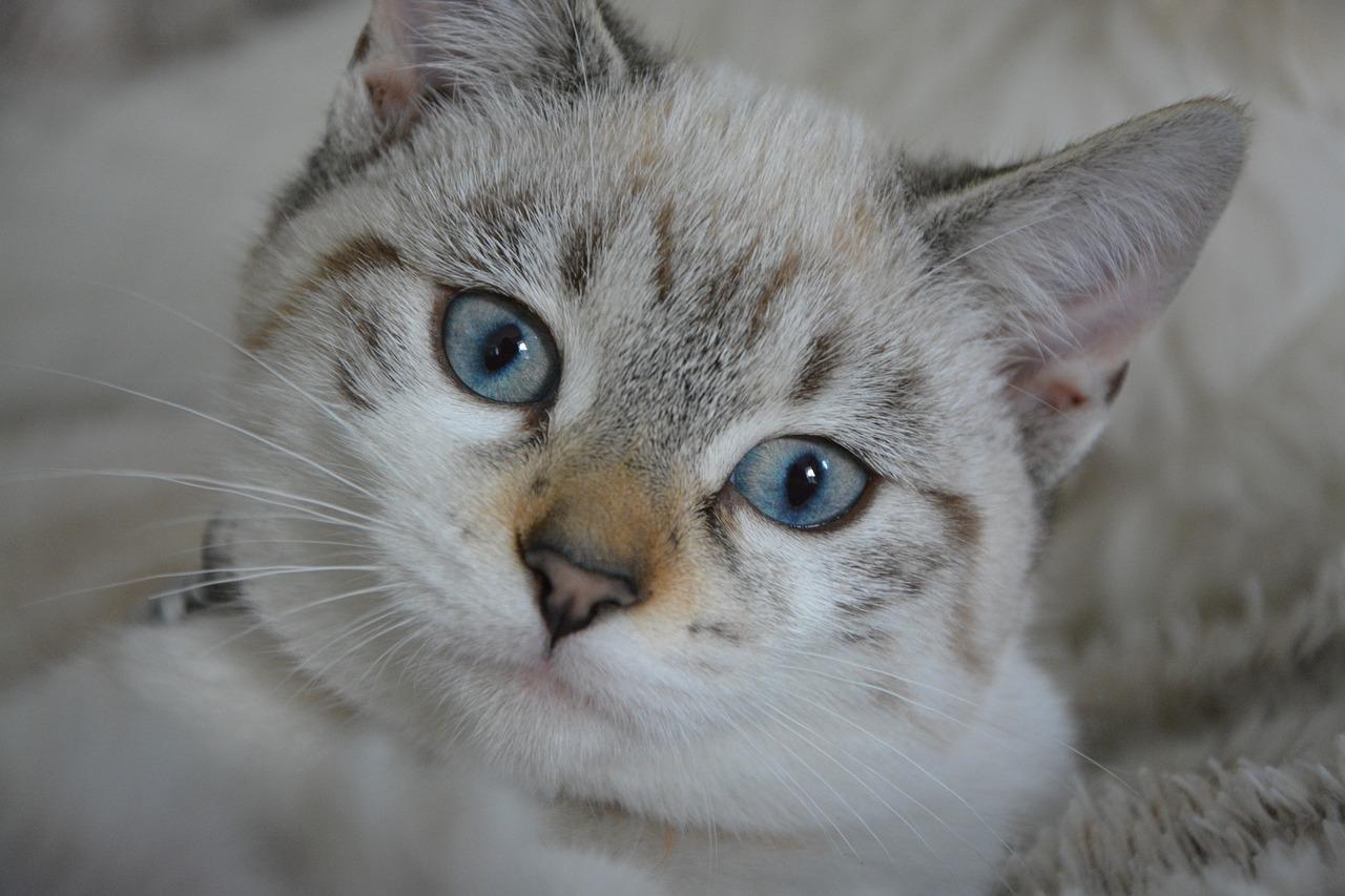 aktuell Katze Zubehoer