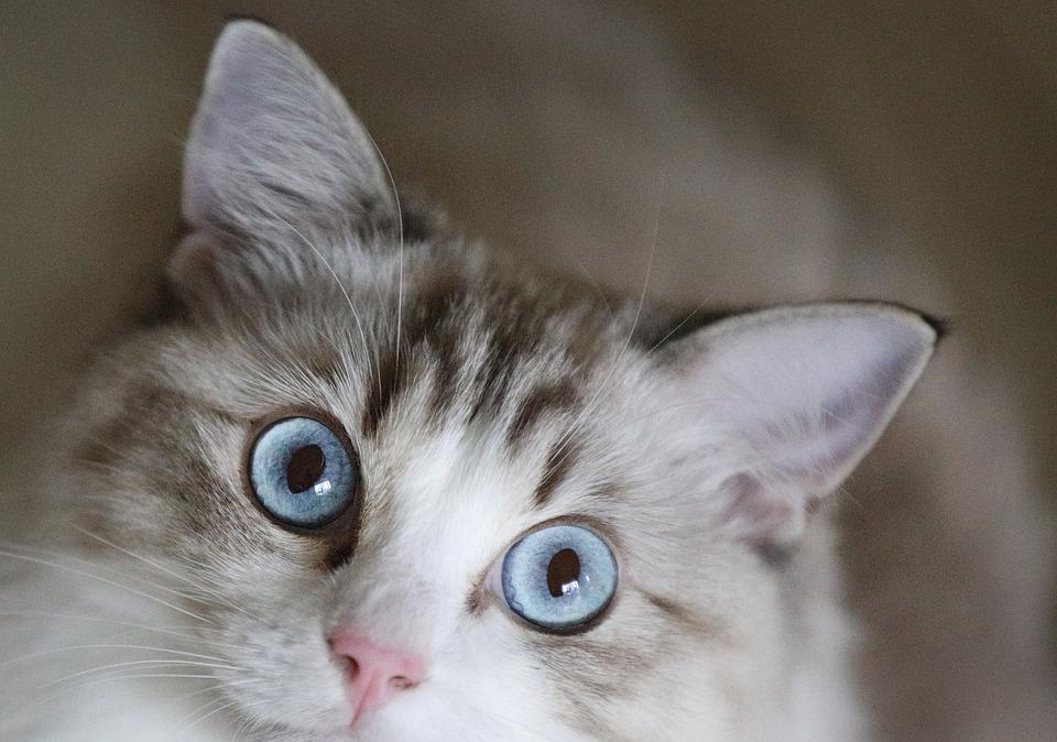 Katze Futter Leckerlies