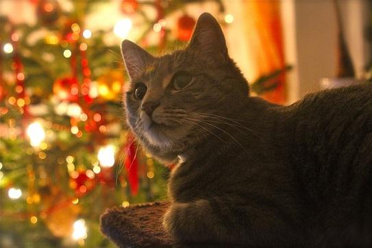 Keine Tiere zu Weihnachten