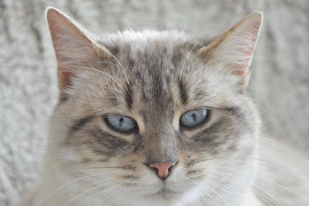 DIY Katzenschloss selber bauen