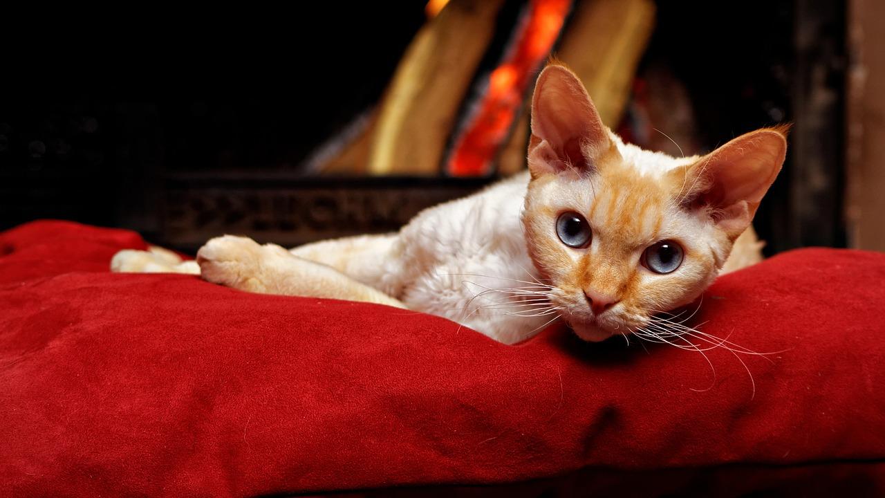 Katzenkissen naehen