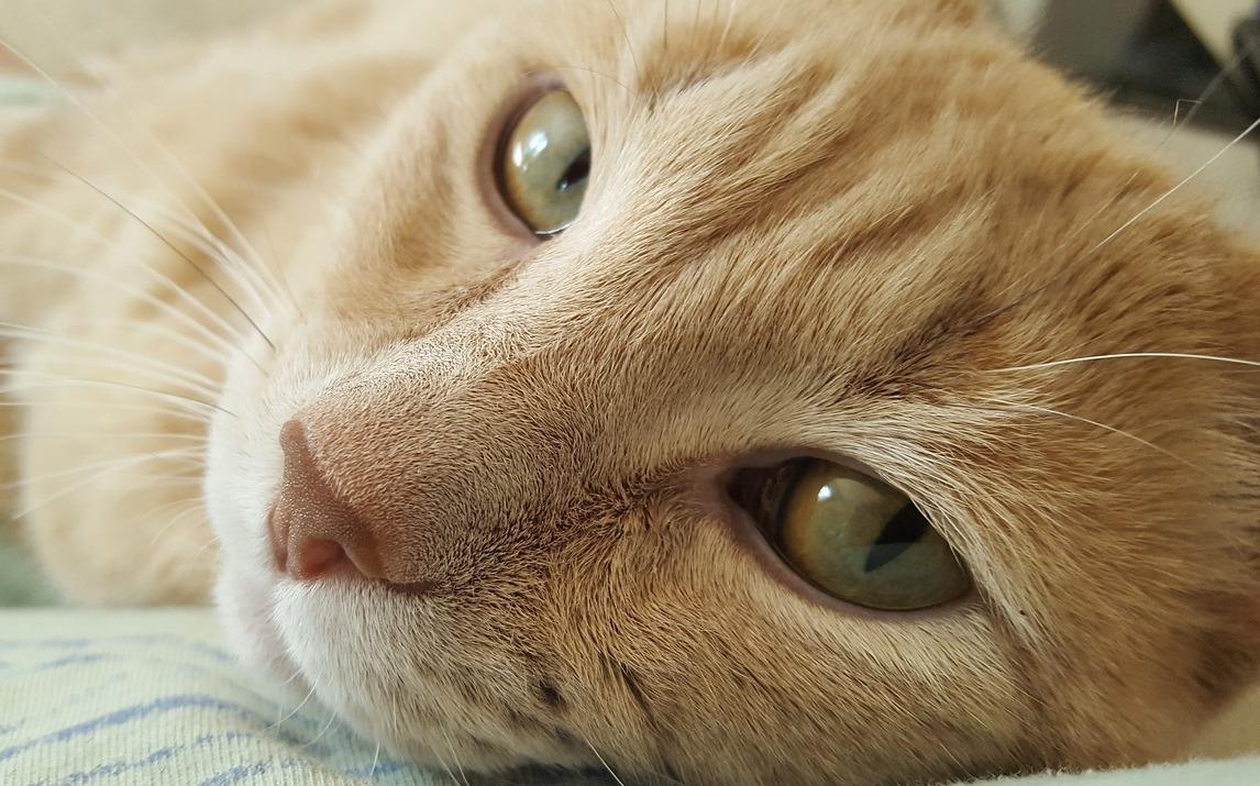 Schlafsack für Katzen selber machen
