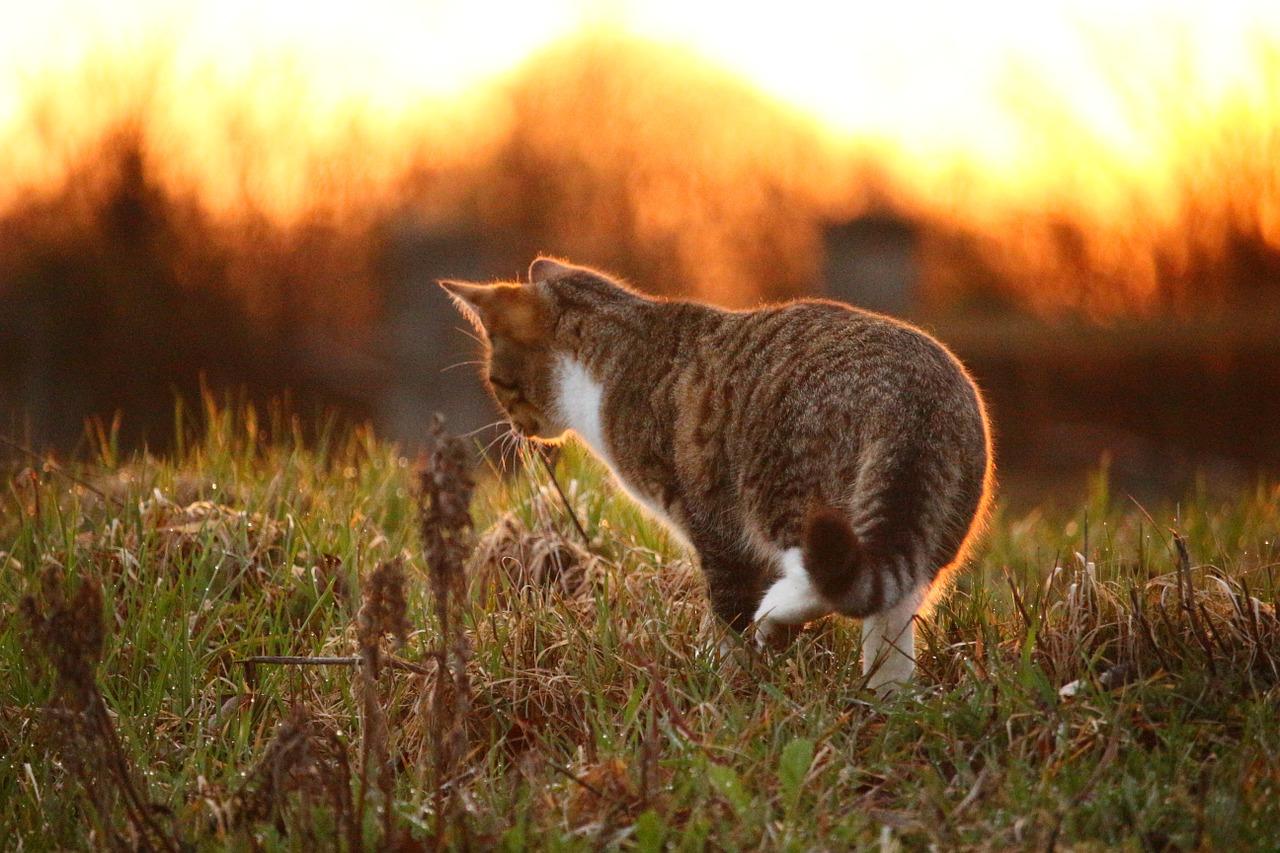 Schnueffelwiese fuer Katzen