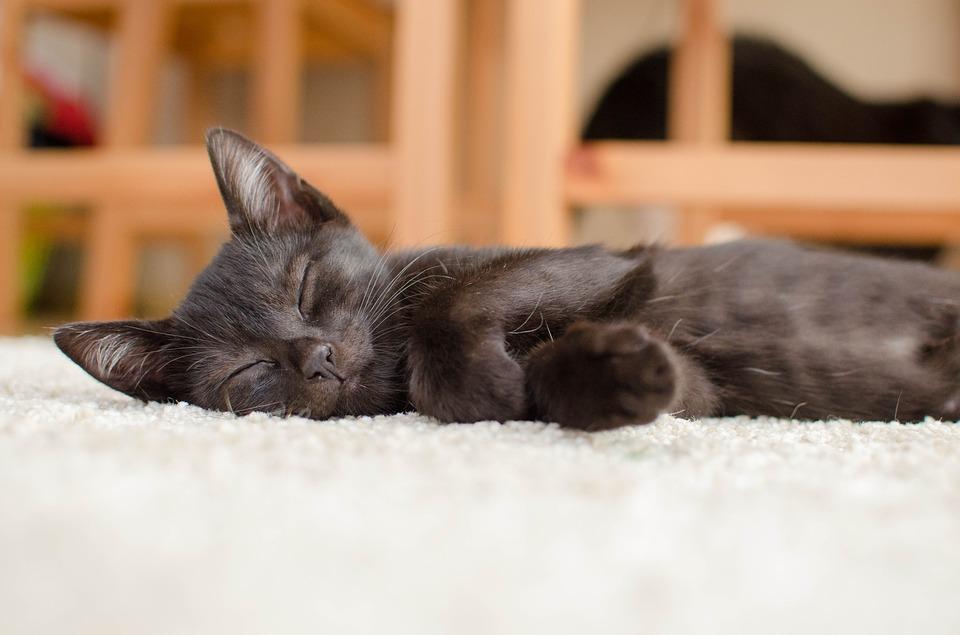 Katzenbett Selber Häkeln Katzenblogde Interessantes Für