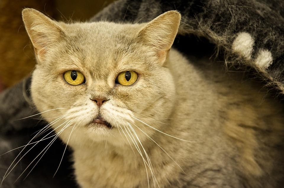 Tierschutzvideo alte Katzen