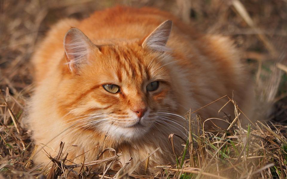 Wolle aus Katzenhaaren