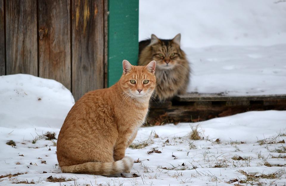 isolierte Boxen für Katzen