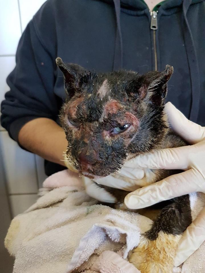 verbrannte Katze3