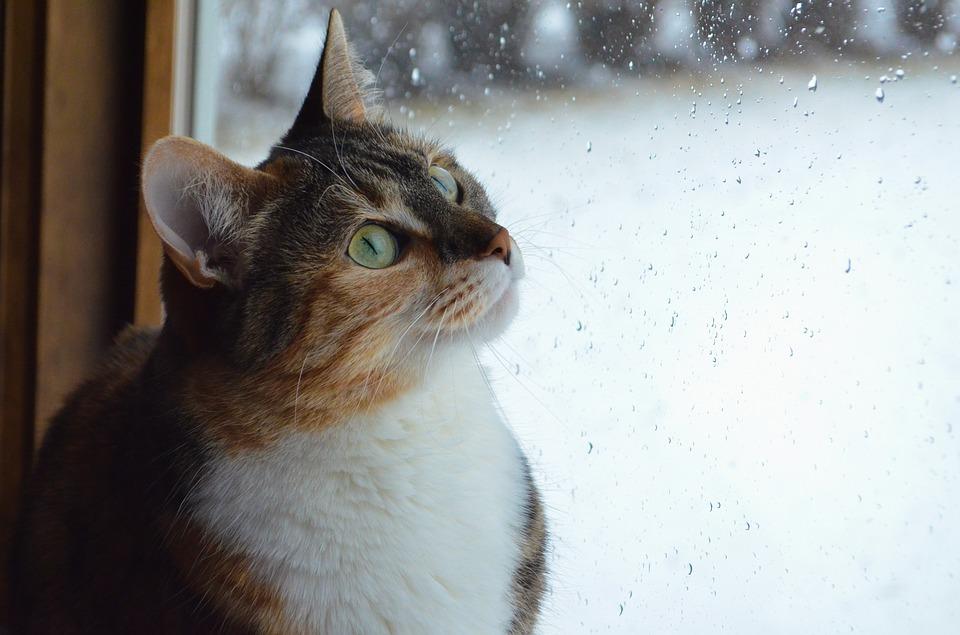 Katze Fensterliegeplatz