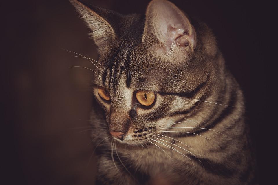 Katze aus Fleecedecke basteln