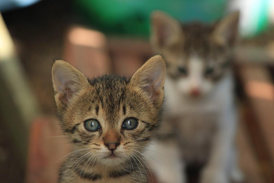 Katzenangebote Zubehoer