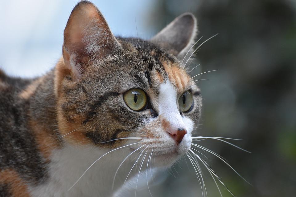 Katzenfilm