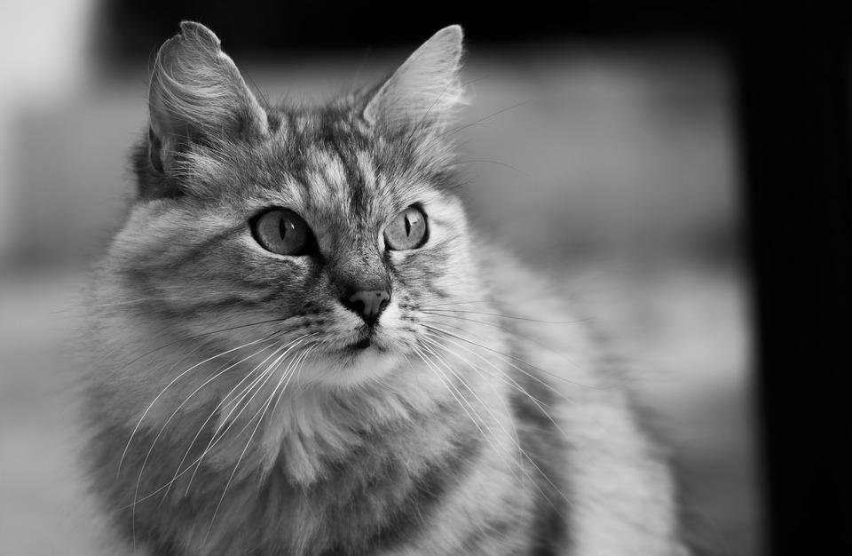Katzenspielzeug aus Pappe